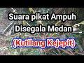 Suara Pikat Ampuh Disegala Medan Kutilang Kejepit Khusus Burcil Pikat Burung  Mp3 - Mp4 Download