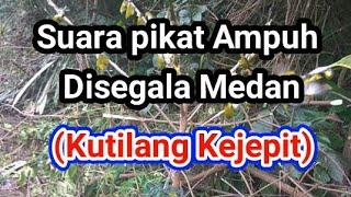 Download Lagu Suara Pikat Ampuh disegala Medan | Kutilang Kejepit | Khusus Burcil #Pikat_Burung mp3