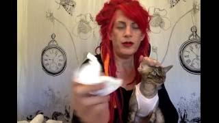 Basic Ear wash and Cleaning with Devon Rex Devlin by Airie McCready of Simply Sphynx