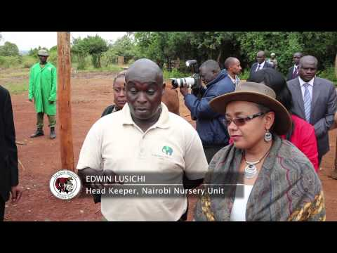 Kenya's First Lady Margaret Kenyatta Fosters an Elephant-DSWT