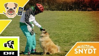 Hund giver sin ejer kæmpe-sviner!| Ultra Snydt