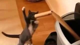 самое смешное видео про котов и кошек(Развлекайтесь вместе с нами! Самые смешные видео со всего интернета.Подписывайтесь на наш канал! Экологичн..., 2015-08-14T14:45:58.000Z)
