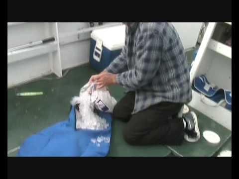 4ebc9583d3 Fish Chiller Bag Demonstration June 2009 - YouTube