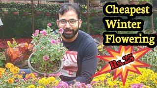 Cheapest Winter Plant Nursery in Delhi | सर्दियों मे लगाए ये फूलों के पौधे | In Delhi