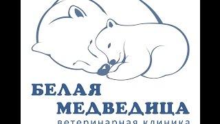 Ветеринарная клиника Белая Медведица, Москва.(, 2014-07-27T23:31:44.000Z)