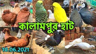কালামপুর হাট থেকে পাখি ও কবুতরের দাম যাচাই করুন   প্রতি বৃহস্পতিবার    Kalampur Pet Market (V - 279)