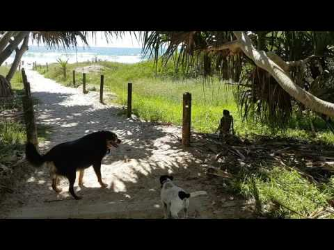 "Cat and dogs playing together ""Beach day fun with  cute dogs Bella and Beau"