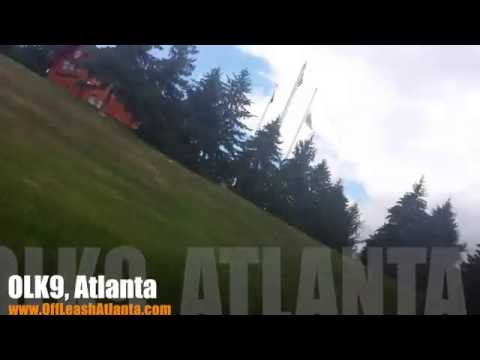100+ Yard Distance Down   Rough Collie   Dog Training Atlanta