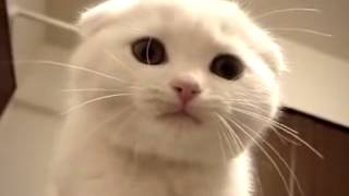 Kittens Meowing and talking