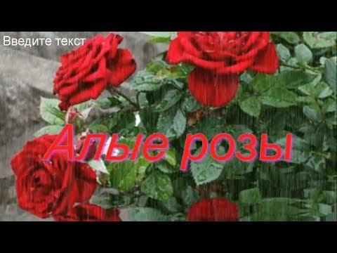 Алые розы Песня рвет душу - Видео с YouTube на компьютер, мобильный, android, ios