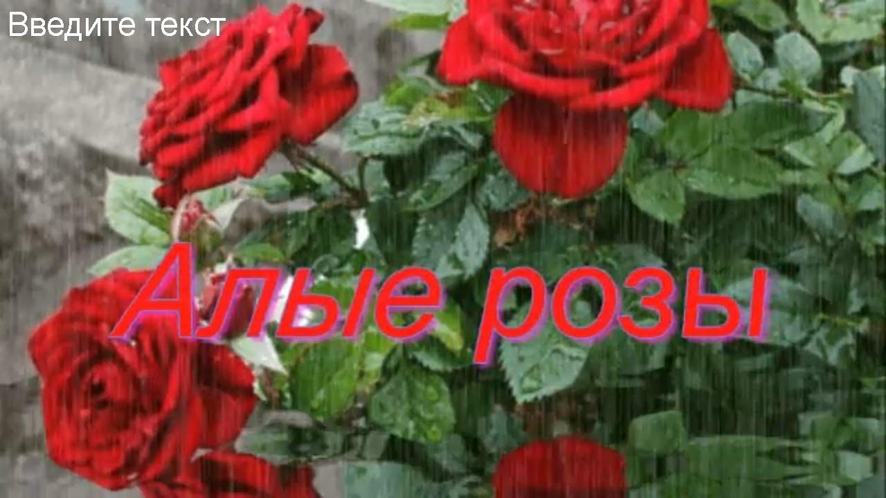 песня она любила розы