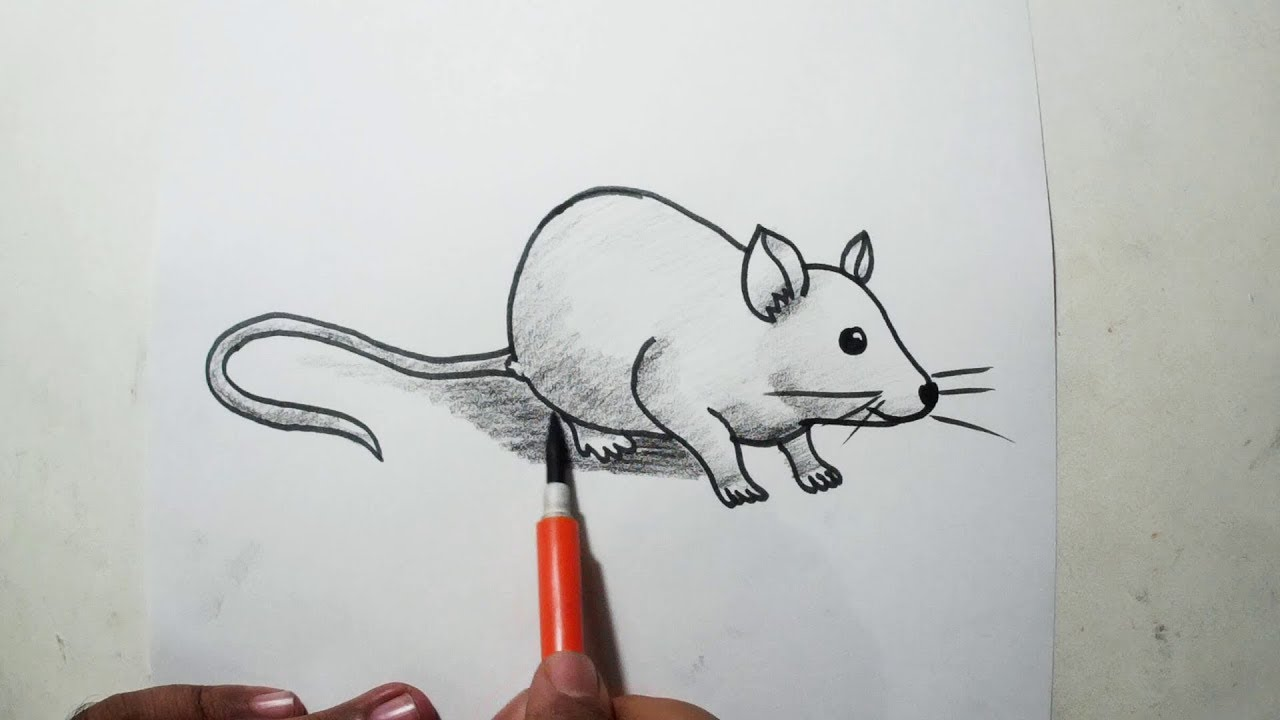 How To Draw A Rat Easy Pencil Drawing