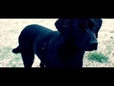 Simple Life - a cinematic film (Award Winning Short Film)