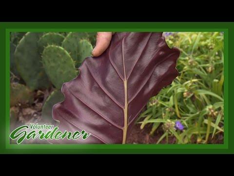 Tropical Plant Introductions | Volunteer Gardener