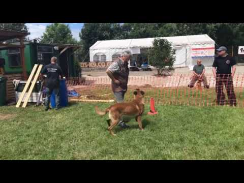 Category 3 Global Ring UK competition dog sport
