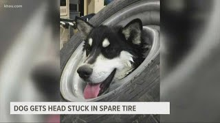 Ouch: Dog gets head stuck in spare tire