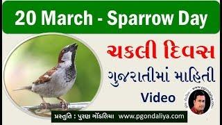 ચકલી દિવસ | Sparrow day | 20 March World Sparrow day in Gujarati By Puran Gondaliya
