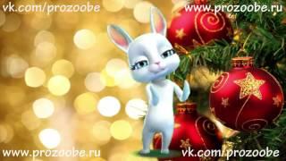 ❄❄❄ Поздравление С Новым Годом 2017 ❄❄❄ от ZOOBE Зайки Домашней Хозяйки