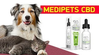 Can I Give My Dog Human CBD Oil - MediPets Review!