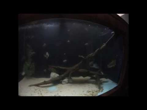 Pet Flathead, Blue, And Channel Catfish