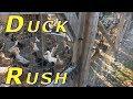 Morning Duck Rush