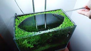 20th Month – (Vs.) NO filter, NO CO2, NO Ferts 5 Gallon Nano Tank
