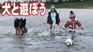 サッカー遊び大好き ボール遊び大好き ジャーマンシェパード犬マック外...