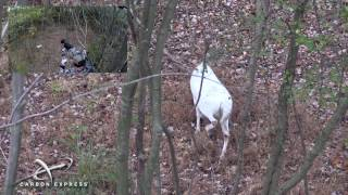 DEER HUNTING | HUNTING A PIEBALD WHITETAIL DEER