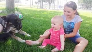 60 Best baby fails 2020اجمل مقاطع الفيديو المضحكة للأطفال