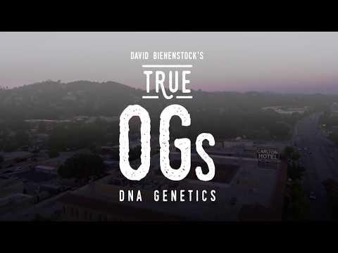 DNA Genetics, Creator of Tangie & More – True OGs