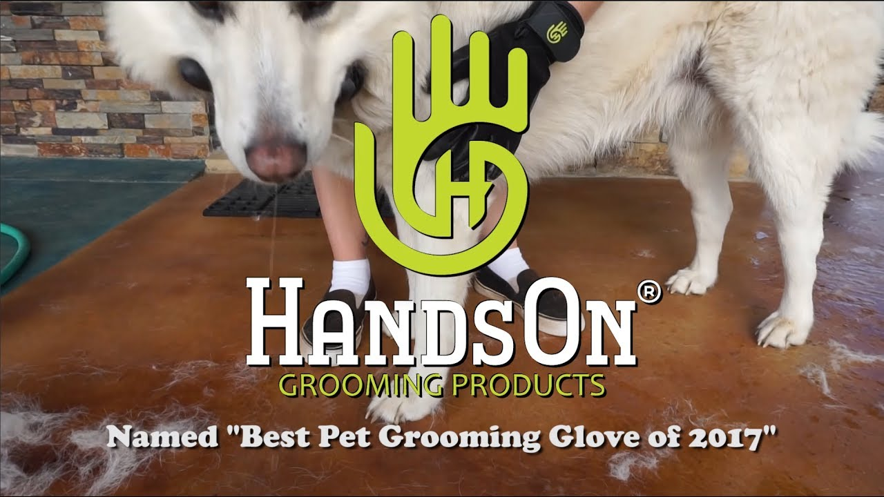 Download HandsOn Gloves For Dogs and Cats