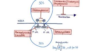 protein synthesis inhibitors antibiotics
