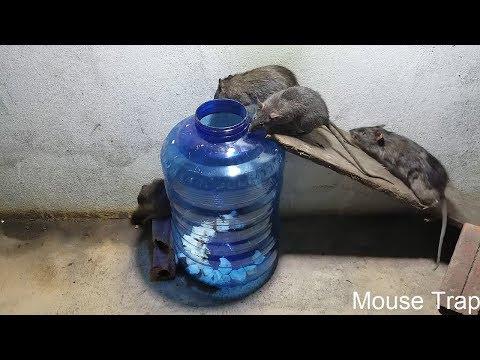 Largest Mouse 1kg / Most Simple Mouse Trap / Homemade Mouse Trap / Save Lots Of Mouse / Mouse Trap