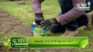 Sumin - Pielęgnacja i nawożenie krzewów owocowych