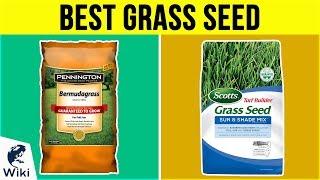 Grass Seed - 10 Best Grass Seed 2019