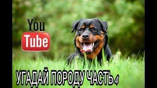 УГАДАЙ ПОРОДУ собаки часть 4