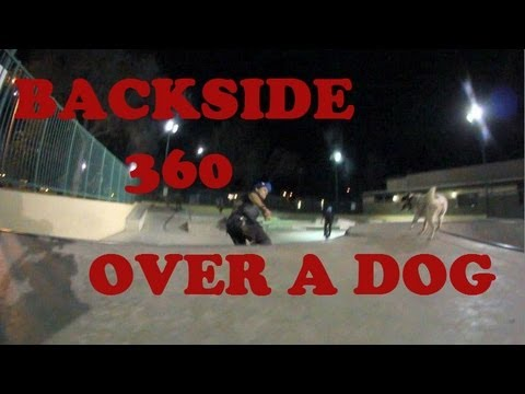 Bs 360 nose grab over a dog