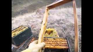 Winter BeeKeeping Series Episode 1: First loss