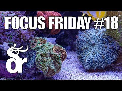 FF#18 | Keeping Mushroom Corals | Ricordea & Rhodactis