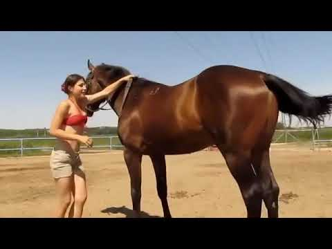 How She Get On The Horse Amazing Horses Funny Horse Videos
