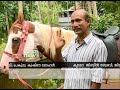 Why this Kozhikkode Youths Decided To Ride Horse To Work   Malabar 6 Aug 2018