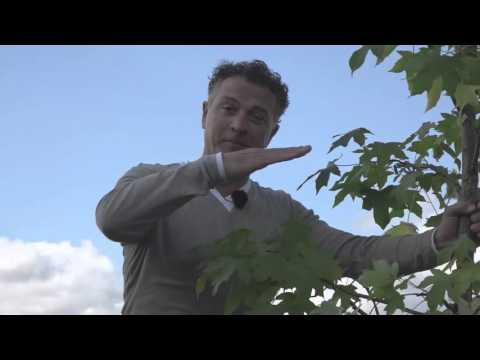 Planta - Uitleg maatvoering bomen