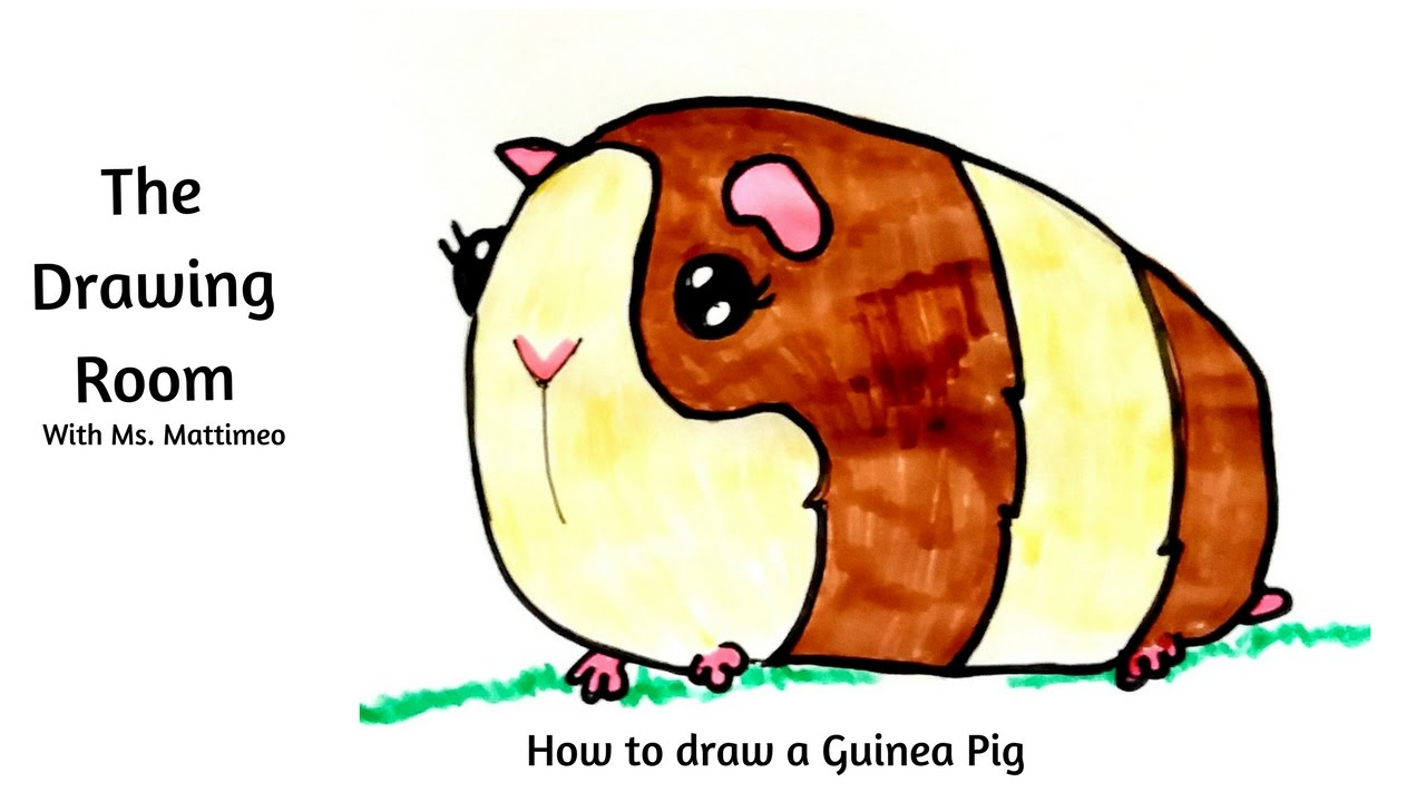 Uncategorized How To Draw A Guinea Pig Step By Step how to draw a guinea pig youtube pig