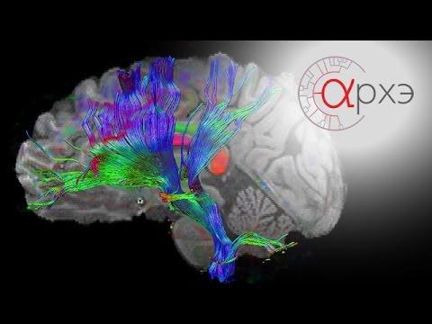 Нервная система - О сайте bono-