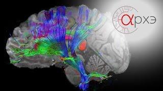 """Вячеслав Дубынин: """"Нейроны и нейросети. Обзор основных структур головного и спинного мозга"""""""