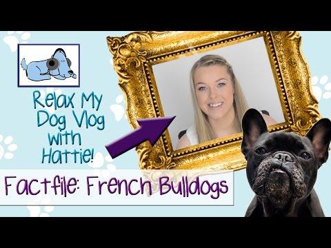 factfile-on-french-bulldogs-🐶-#breedvlog03