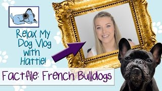 Hattie is back with her Dog Vlog, and this time round she has put t...