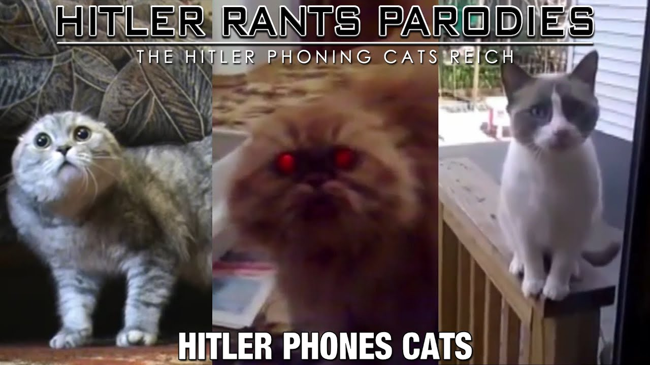 Hitler phones cats
