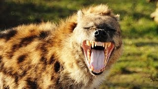 Top 10 Most Dangerous Wild Dogs in the World