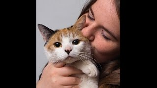 Cat Health - Keeping An Eye On Your Cat Health